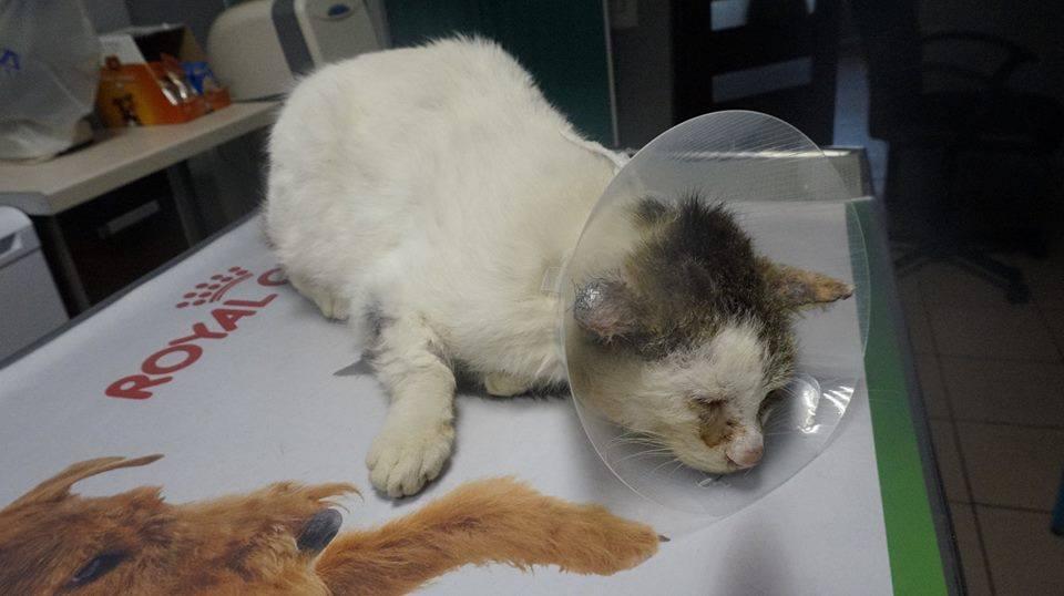 Prosimy o wsparcie dla białego kotka od babci Władzi.