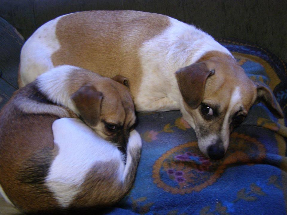 Adoptowane – Pikolo i Petita – dwa mikropsiaki