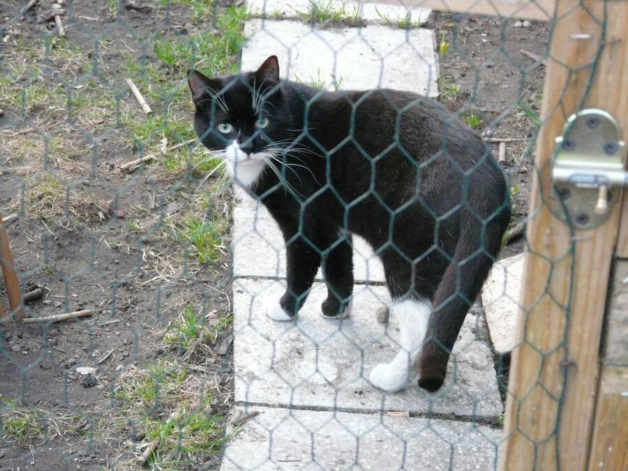 Fraczek – elegant czeka na dom