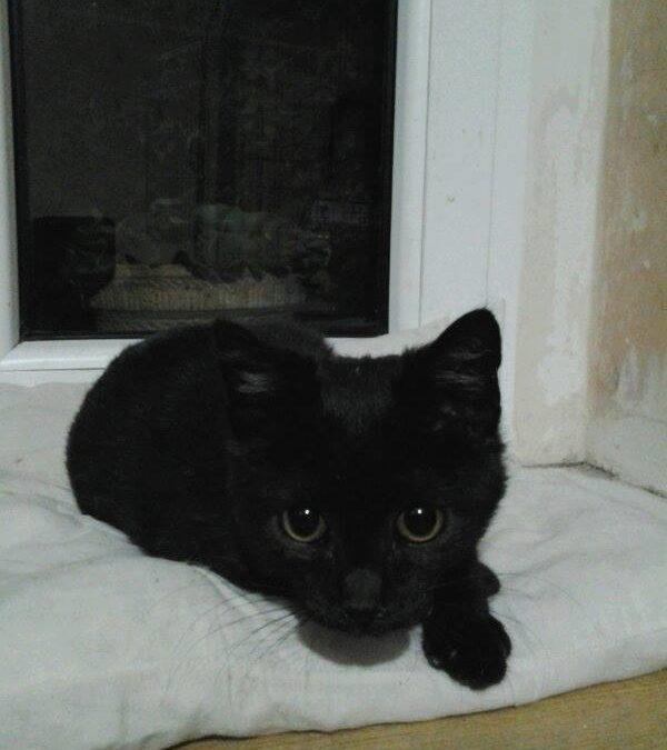 Zagubiony półroczny kotek