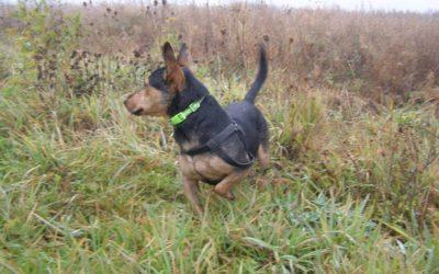 Taro – pies z szafy do adopcji wirtualnej