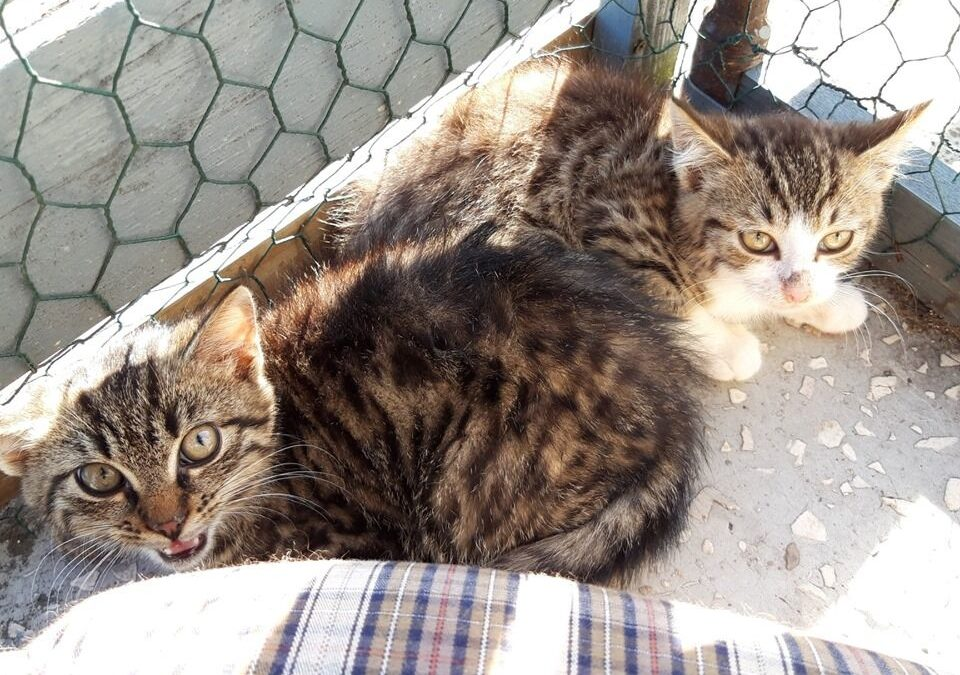 JACEK I PLACEK – pilnie potrzebny dom tymczasowy do oswajania kotków